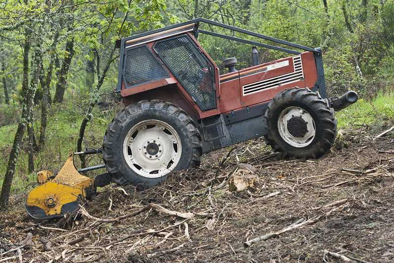 What Is Forestry Mulching and What Are Its Benefits