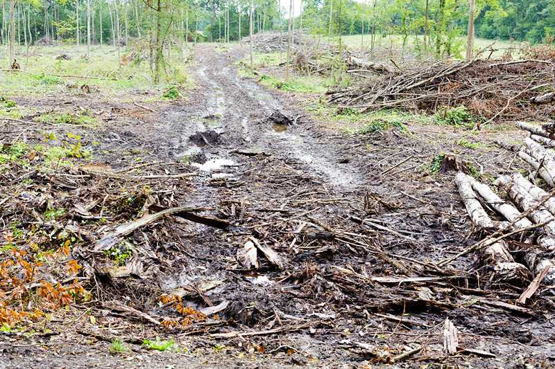 Tips for Choosing the Right Forestry Mulcher